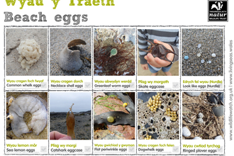 Beach eggs_Spotter sheet_bilingual